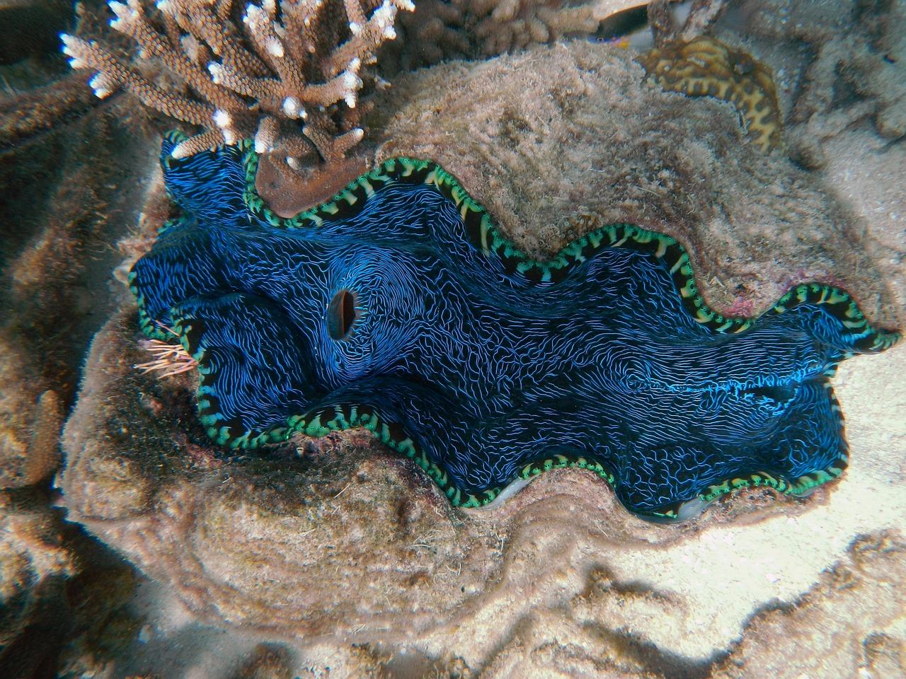 clam-170560_1280