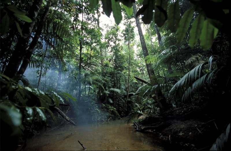 Tropický prales Daintree