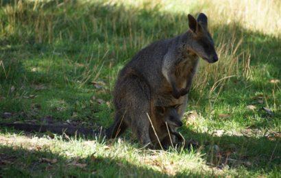 Kakadu Australie – národní park