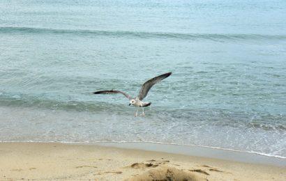 Čeští turisté znovu objevili krásu Bulharska a jeho pláží u Černého moře