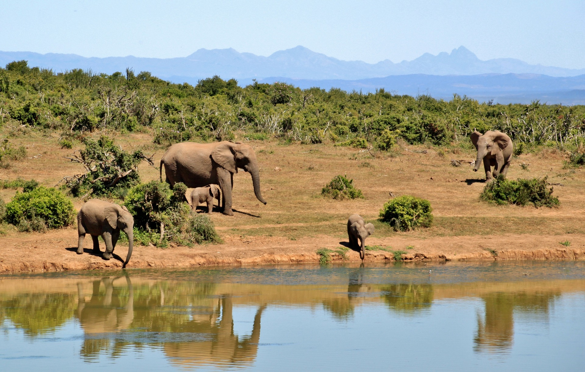elephant-427138_1920