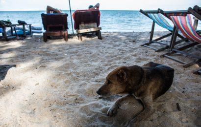 Vnější prostředí a možné alergie u psů