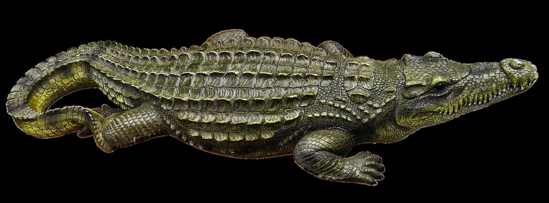 crocodile-3128684_1920